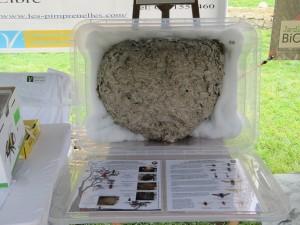 est ce un nid frelon asiatique ?